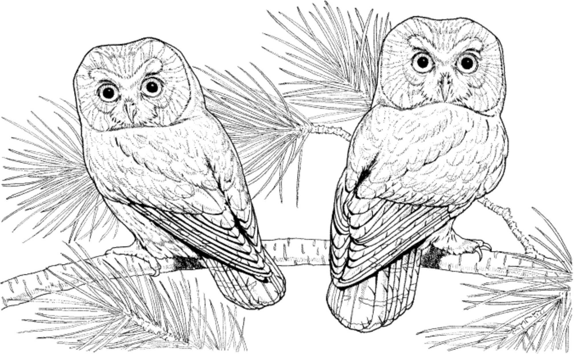 finished owl coloring pages owl pages that are already colored coloring pages owl finished pages coloring