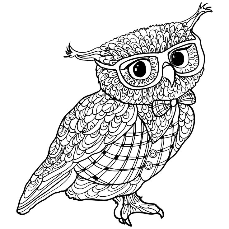 finished owl coloring pages owl sitting on branch for adult coloring owl coloring coloring owl pages finished