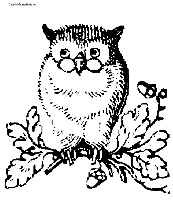 finished owl coloring pages sugar skull owl coloring pages at getcoloringscom free finished coloring pages owl