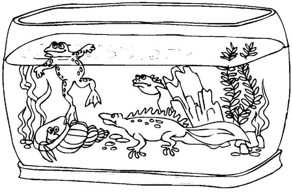 fish aquarium coloring pages awesome fish tank coloring page netart fish aquarium pages coloring