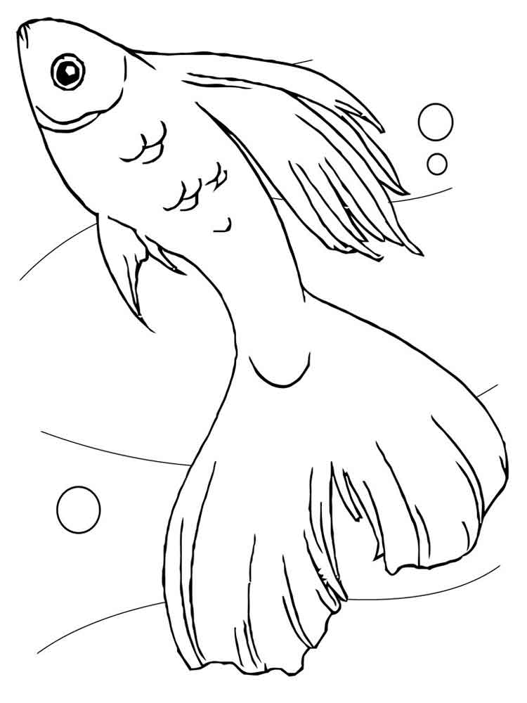 fish aquarium coloring pages happy fishes in fish tank coloring page netart coloring pages aquarium fish