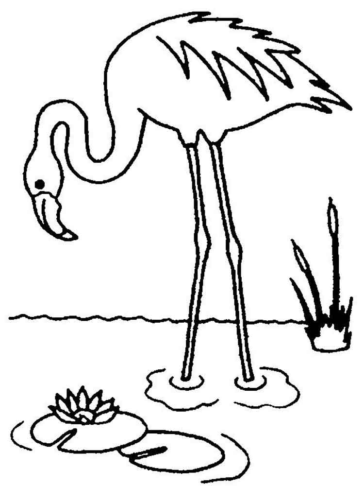 flamingo coloring pages flamingo coloring page printable smiling colors coloring pages flamingo