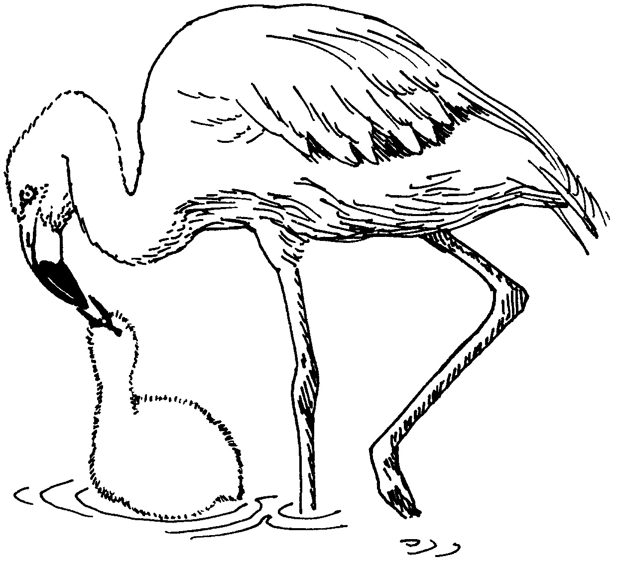 flamingo coloring pages pink flamingo coloring page at getdrawings free download pages coloring flamingo