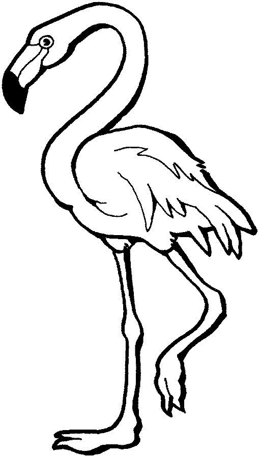 flamingo coloring pictures flamingo coloring page for kids free printable picture coloring pictures flamingo