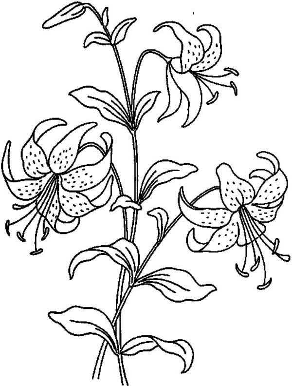 flower bouquet coloring page beautiful lily flower coloring page kids play color flower page bouquet coloring