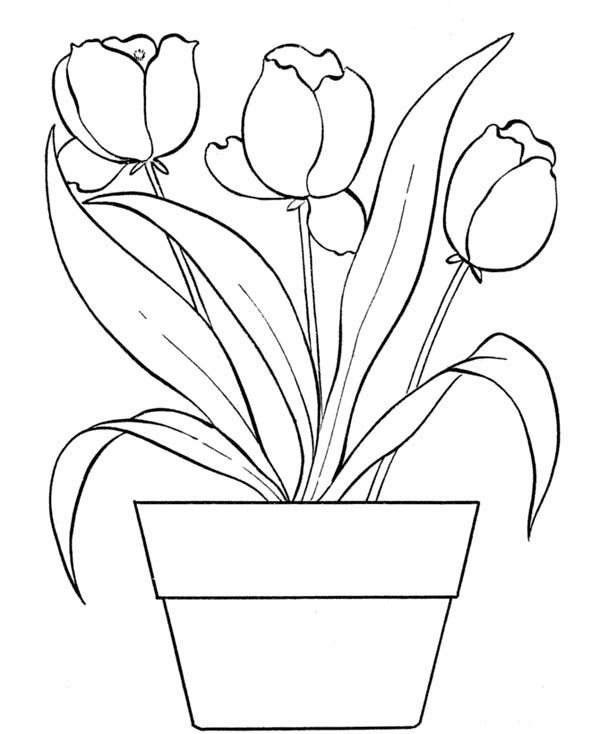 flower bouquet coloring page flower plants in blossom coloring page coloring sky bouquet page coloring flower