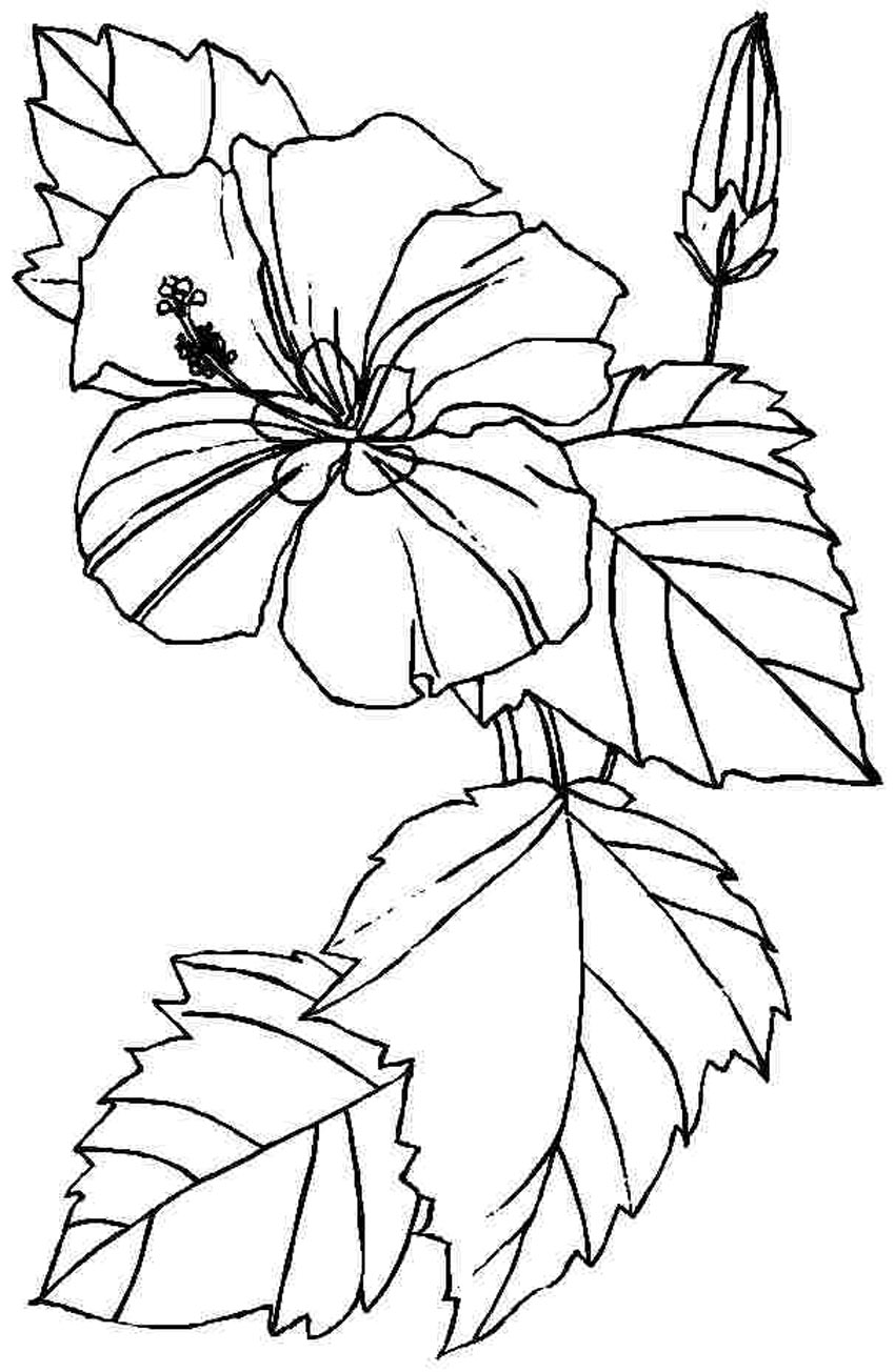 flower coloring pages for kids free printable hibiscus coloring pages for kids flower kids pages coloring for