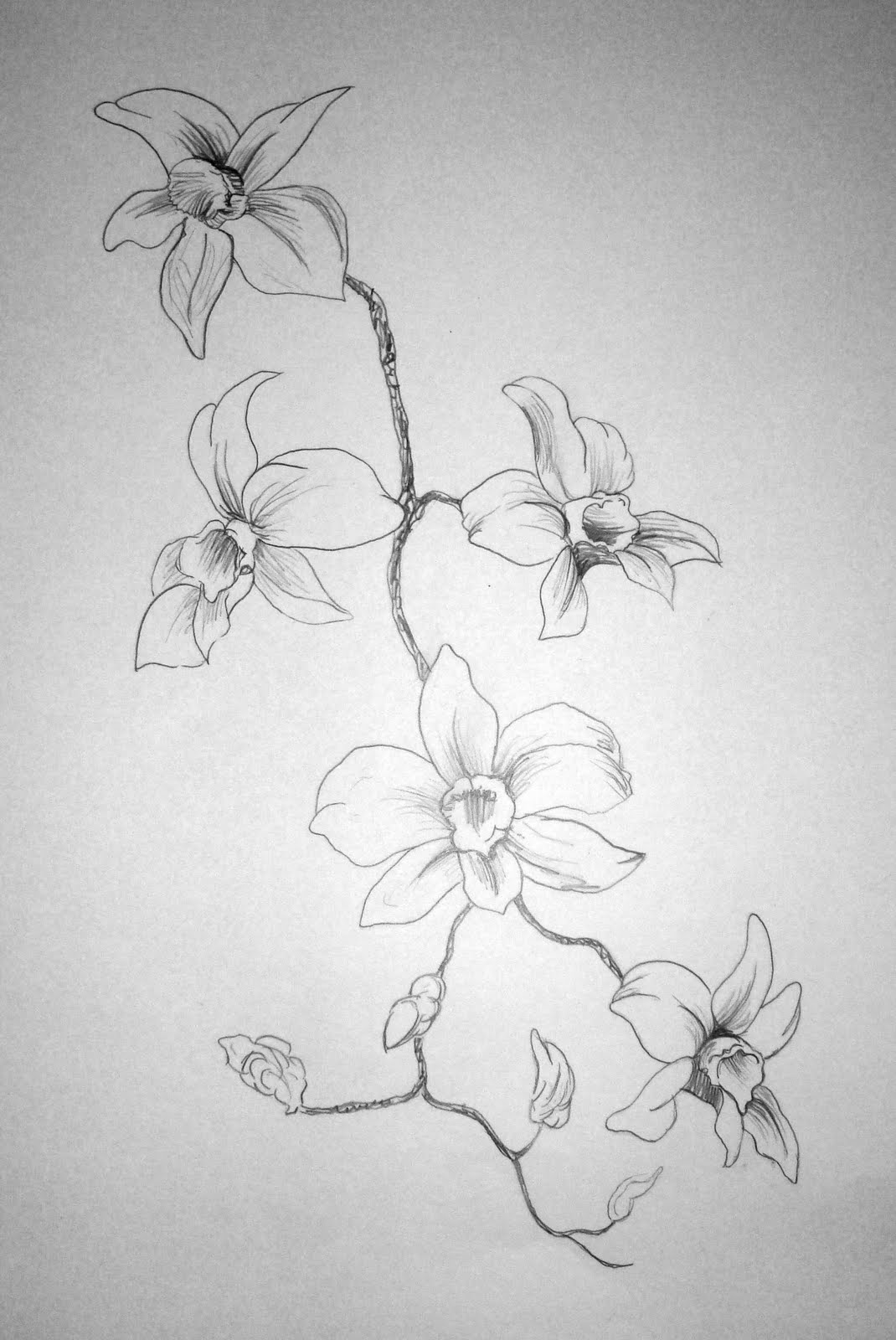 flower drawings 1001 ideas and tutorials for easy flowers to draw pictures drawings flower