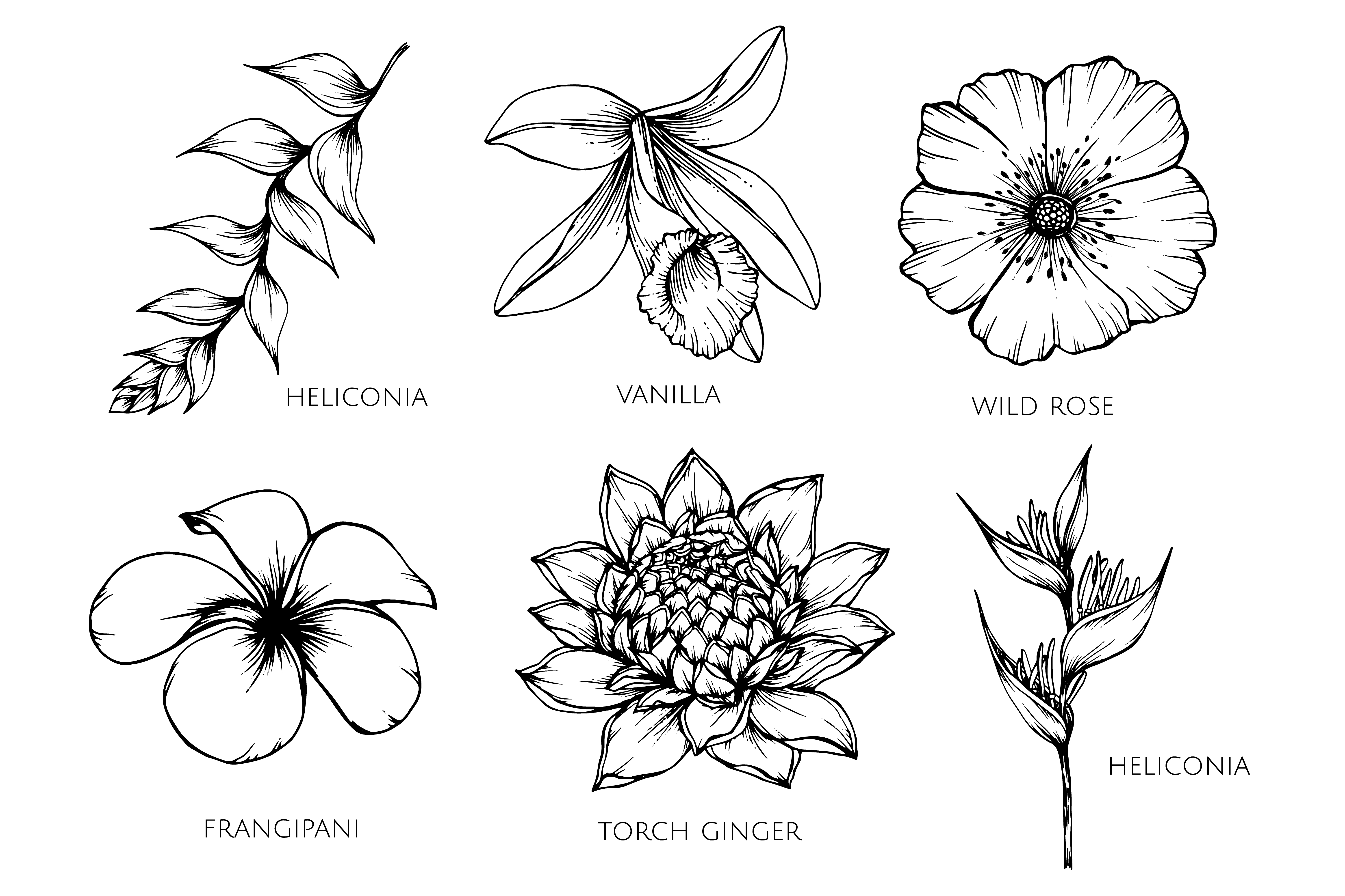 flower drawings drawing lesson flower the scribbles institute drawings flower