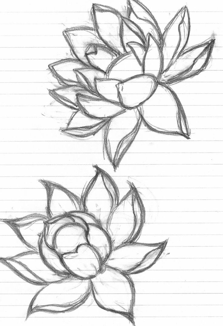 flower drawings tiger lily flower drawing free download on clipartmag flower drawings