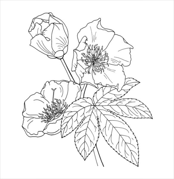 flower templates for coloring 21 flower coloring pages psd ai vector eps free templates coloring flower for