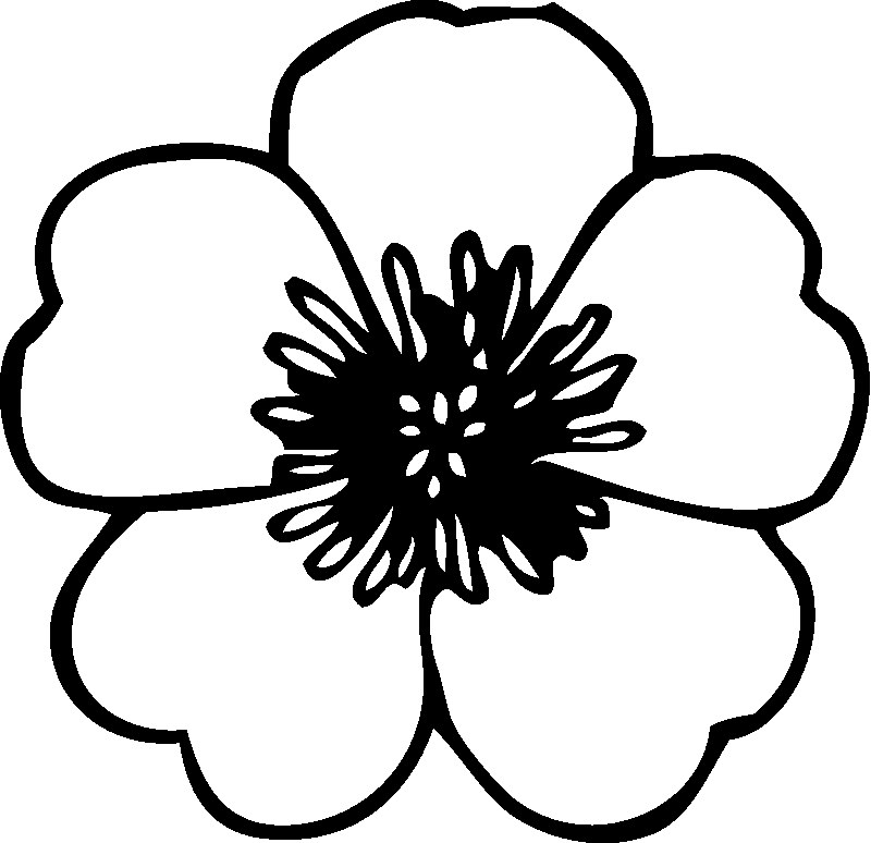 flowers coloring page detailed flower coloring pages to download and print for free coloring page flowers