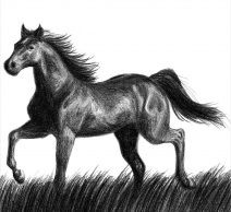 foal drawing face of a foal drawing by roy anthony kaelin foal drawing