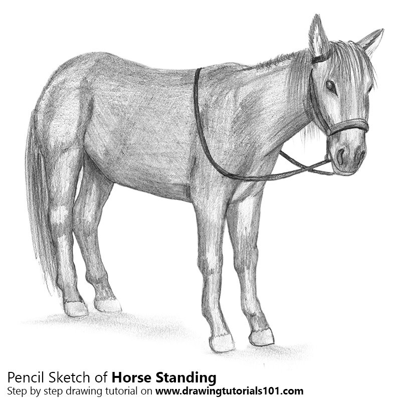 foal drawing galloping horse drawing by agris rautins foal drawing