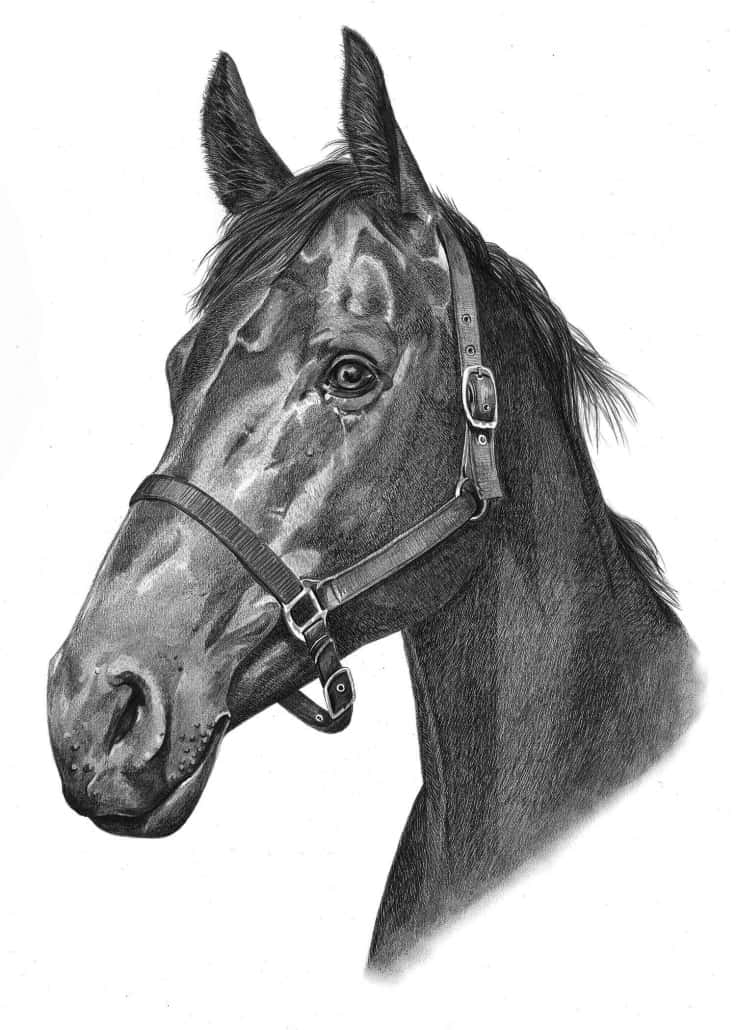 foal drawing horse drawing learn how to draw horses diana hand drawing foal