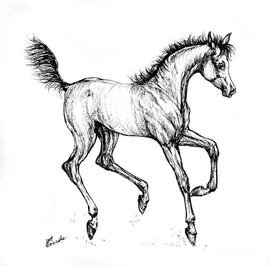 foal drawing horse drawings by angela of pencil sketch portraits drawing foal