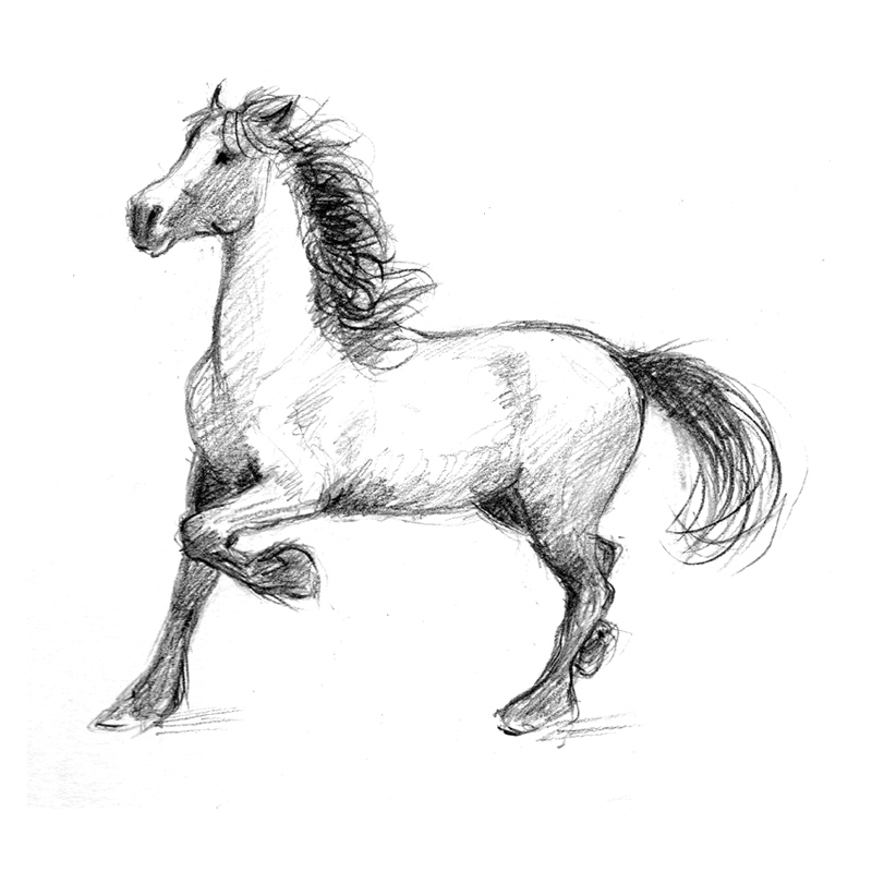 foal drawing horse knotted mane pencil portrait drawing by mike theuer drawing foal