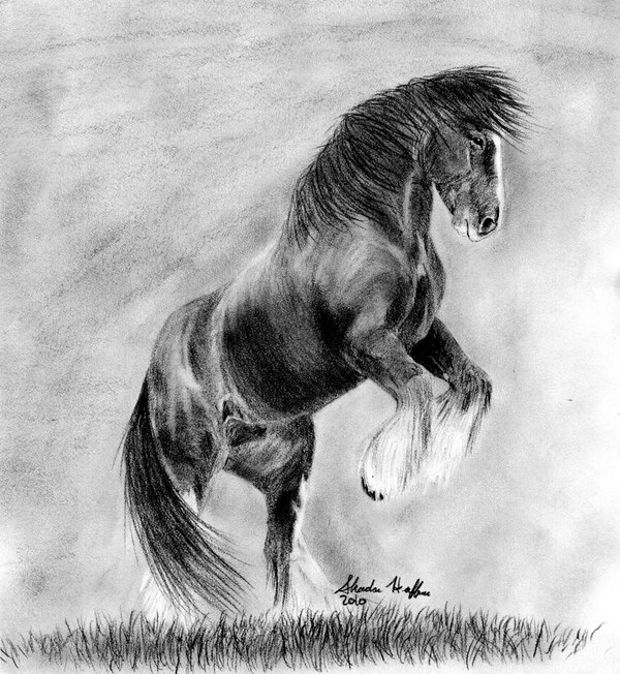 foal drawing learn how to draw paintings portraits how to draw a horse drawing foal