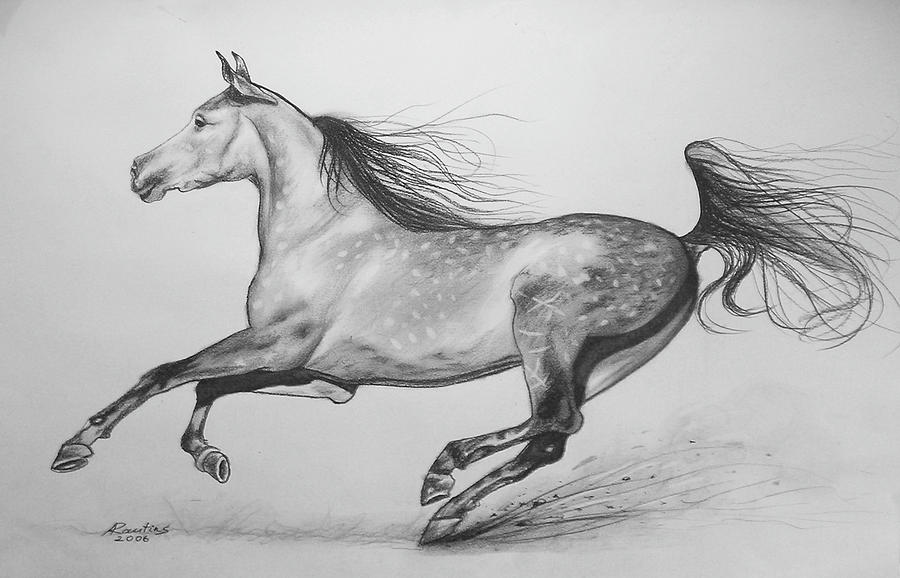 foal drawing learn how to draw paintings portraits how to draw a horse drawing foal 1 1