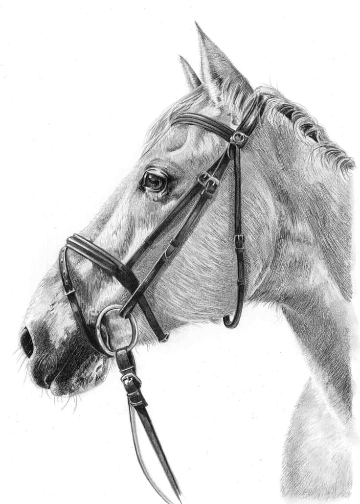 foal drawing pencil pet portraits from photos drawings of cats dogs foal drawing
