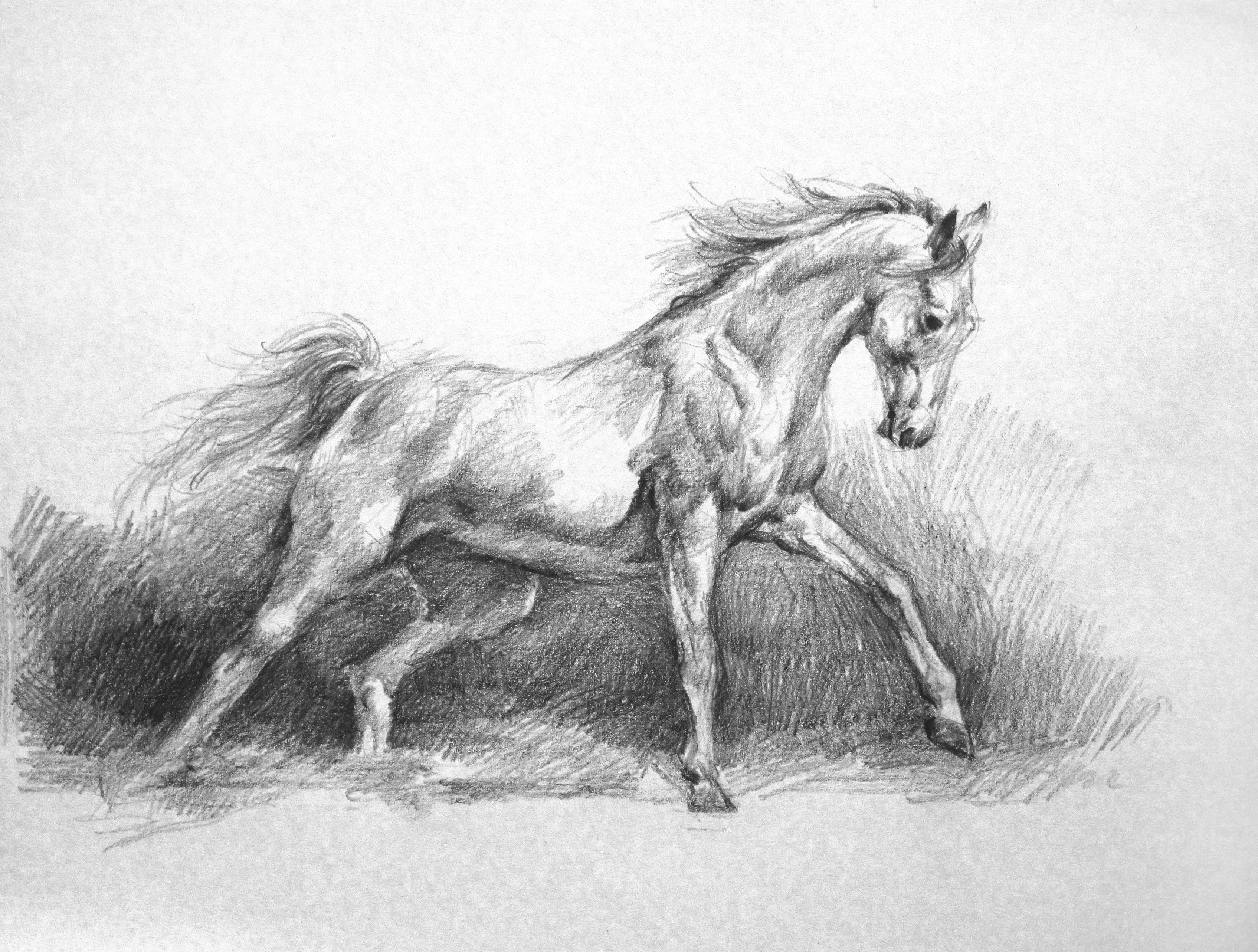 foal drawing running horse drawing by bobby shaw drawing foal