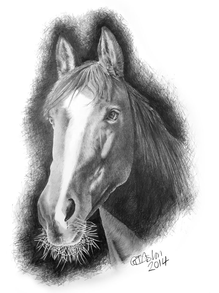 foal drawing standing horse pencil drawing how to sketch standing foal drawing