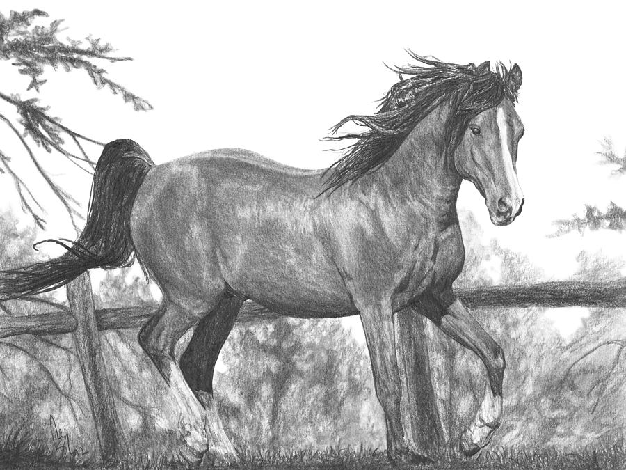 foal drawing stunning quothorsequot ink drawings and illustrations for sale drawing foal