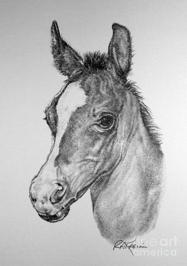 foal drawing tutorial how to draw a horse drawing foal