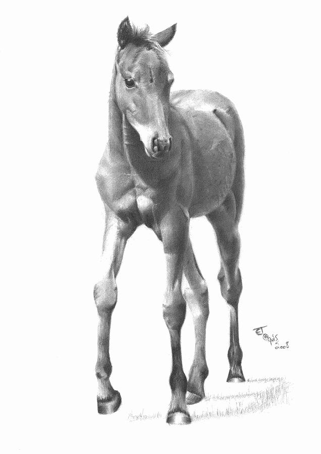 foal drawing worldwide gallery page of signed pencil drawing artwork foal drawing