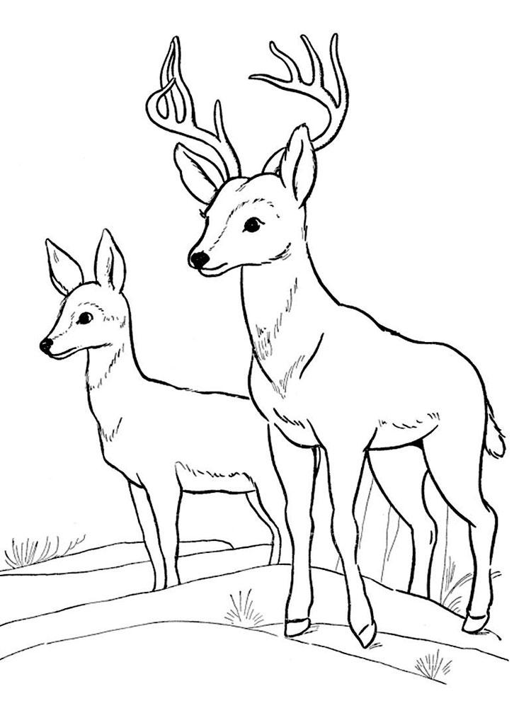 forest animal coloring pages crista forest39s animals art leopard coloring page for kids coloring pages animal forest