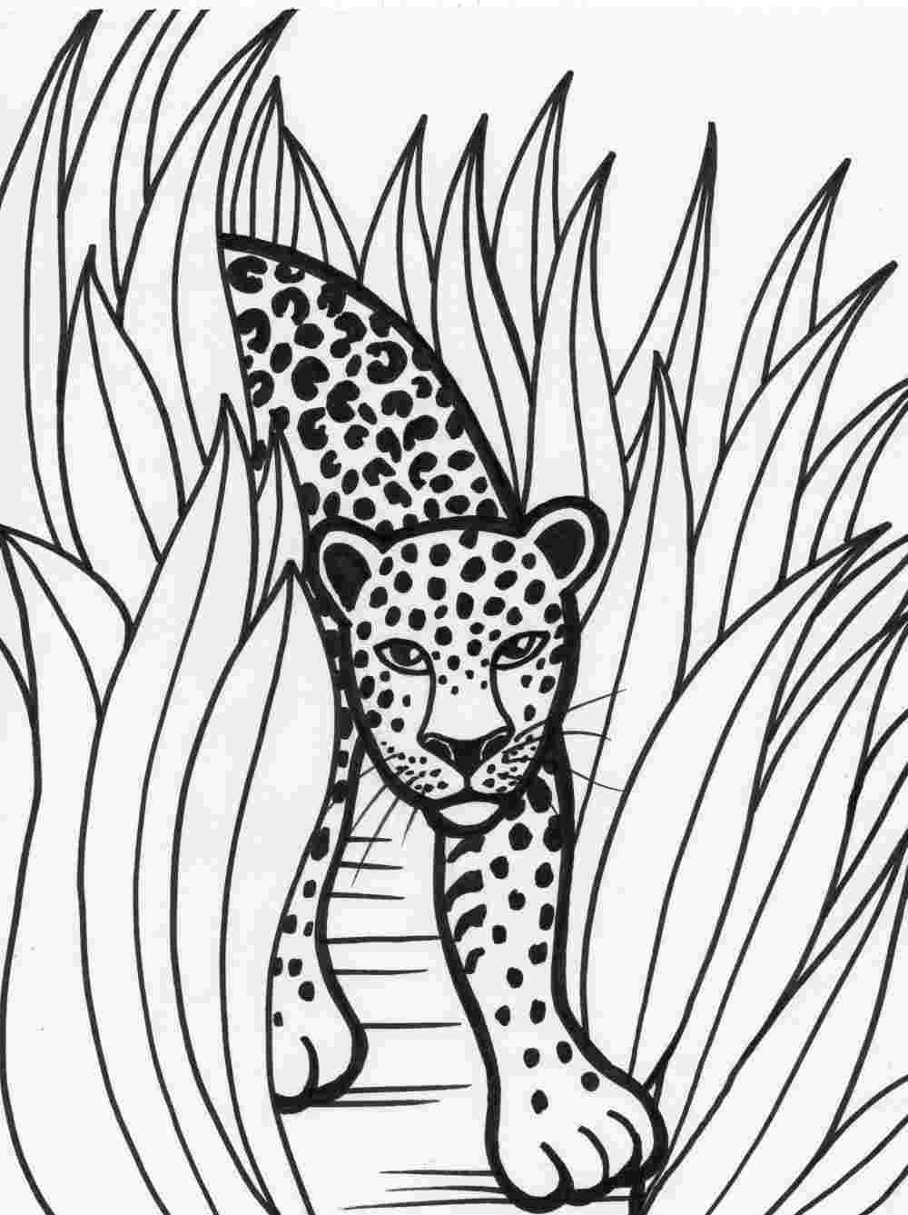 forest animal coloring pages forest animal coloring pages to download and print for free pages animal coloring forest