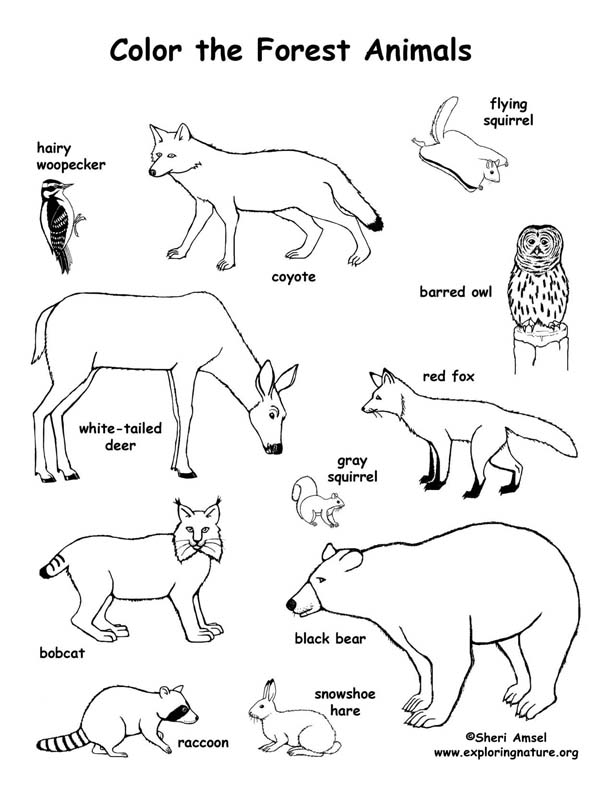 forest animal coloring pages forest animals coloring pages coloring pages to download forest pages coloring animal