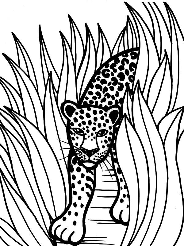 forest animal coloring pages forest coloring pages best coloring pages for kids forest animal coloring pages