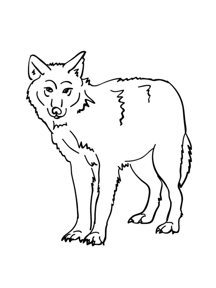 forest animal coloring pages free forest animals coloring pages download and print coloring forest animal pages