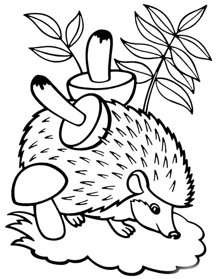 forest animal coloring pages free forest animals coloring pages download and print forest animal coloring pages