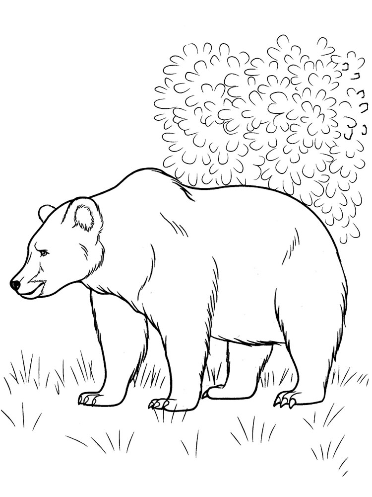 forest animal coloring pages free forest animals coloring pages download and print forest pages animal coloring