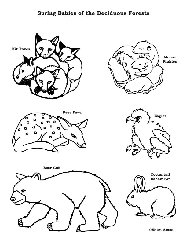 forest animal coloring pages free forest animals coloring pages download and print pages forest animal coloring