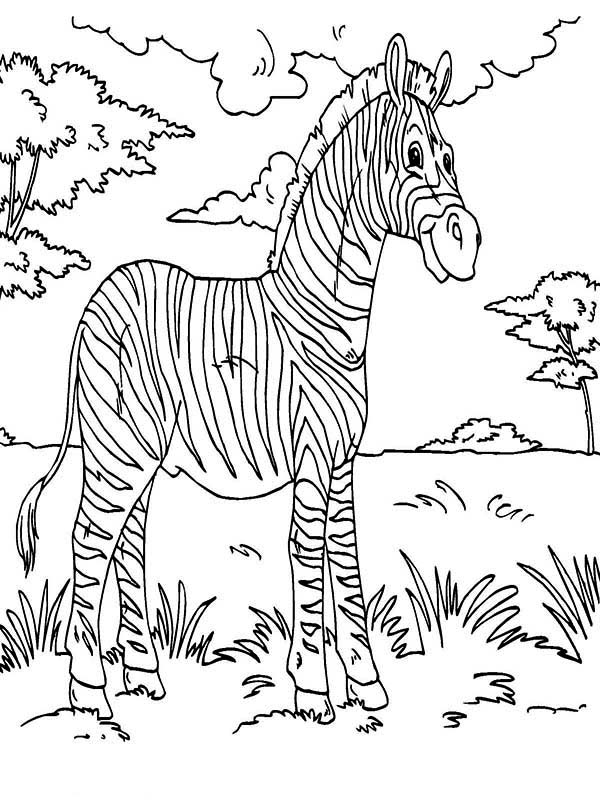 forest animal coloring pages rainforest animal drawing at getdrawings free download animal coloring forest pages