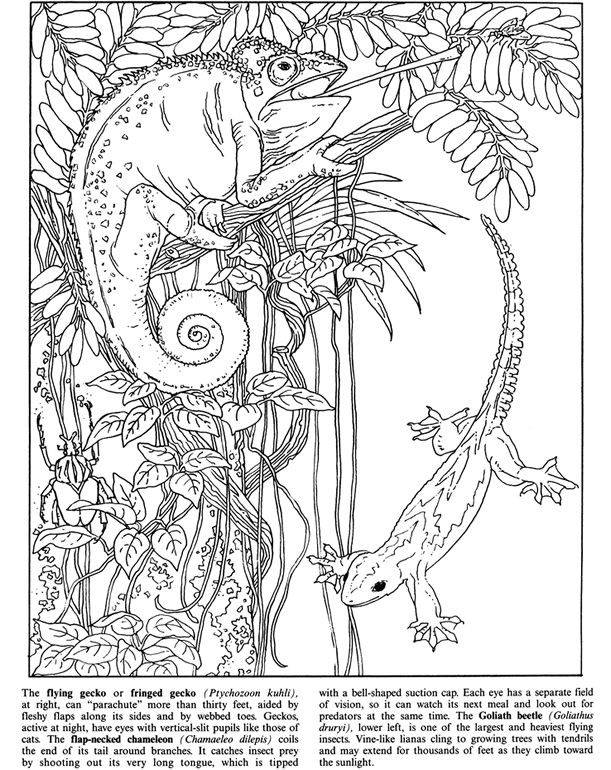 forest animal coloring pages rainforest animals coloring pages printable rainforest animal pages forest coloring