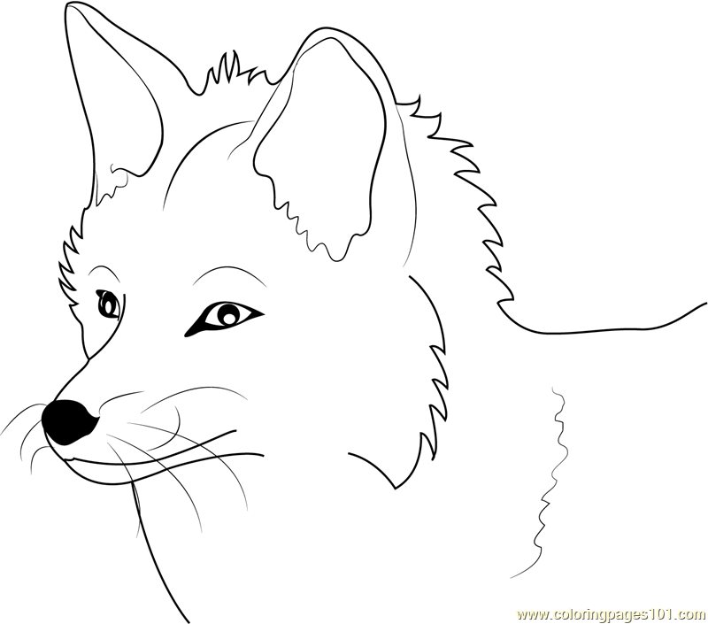 fox face coloring page clipart panda free clipart images page coloring face fox