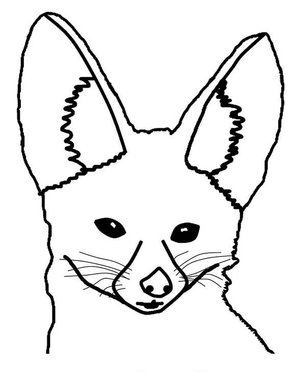 fox face coloring page fox head with patterns foxes adult coloring pages page fox face coloring