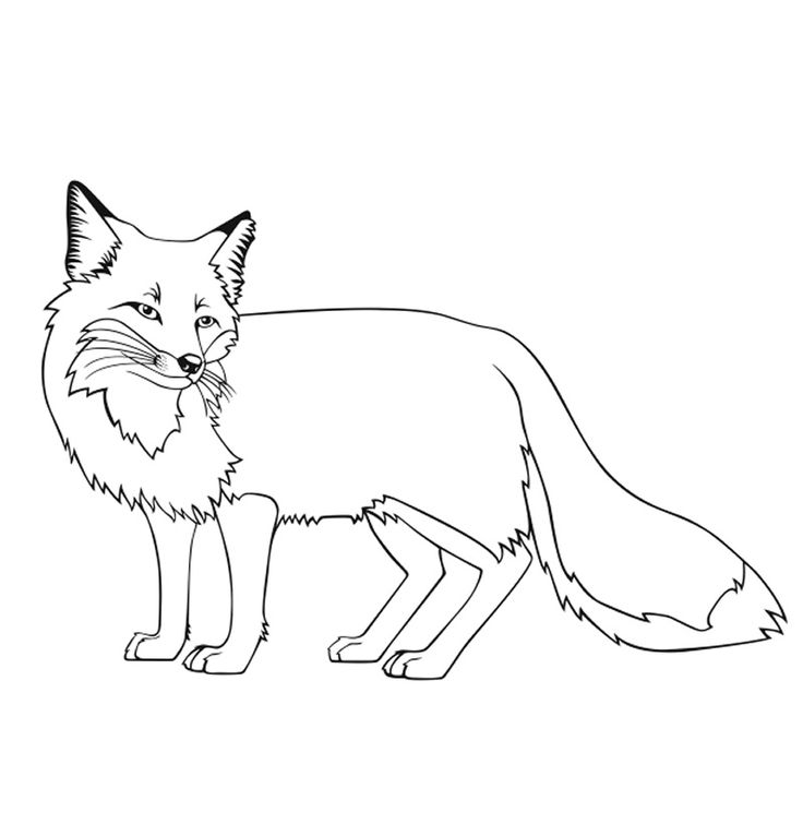 fox face coloring page north african fennec fox coloring page free printable coloring page face fox