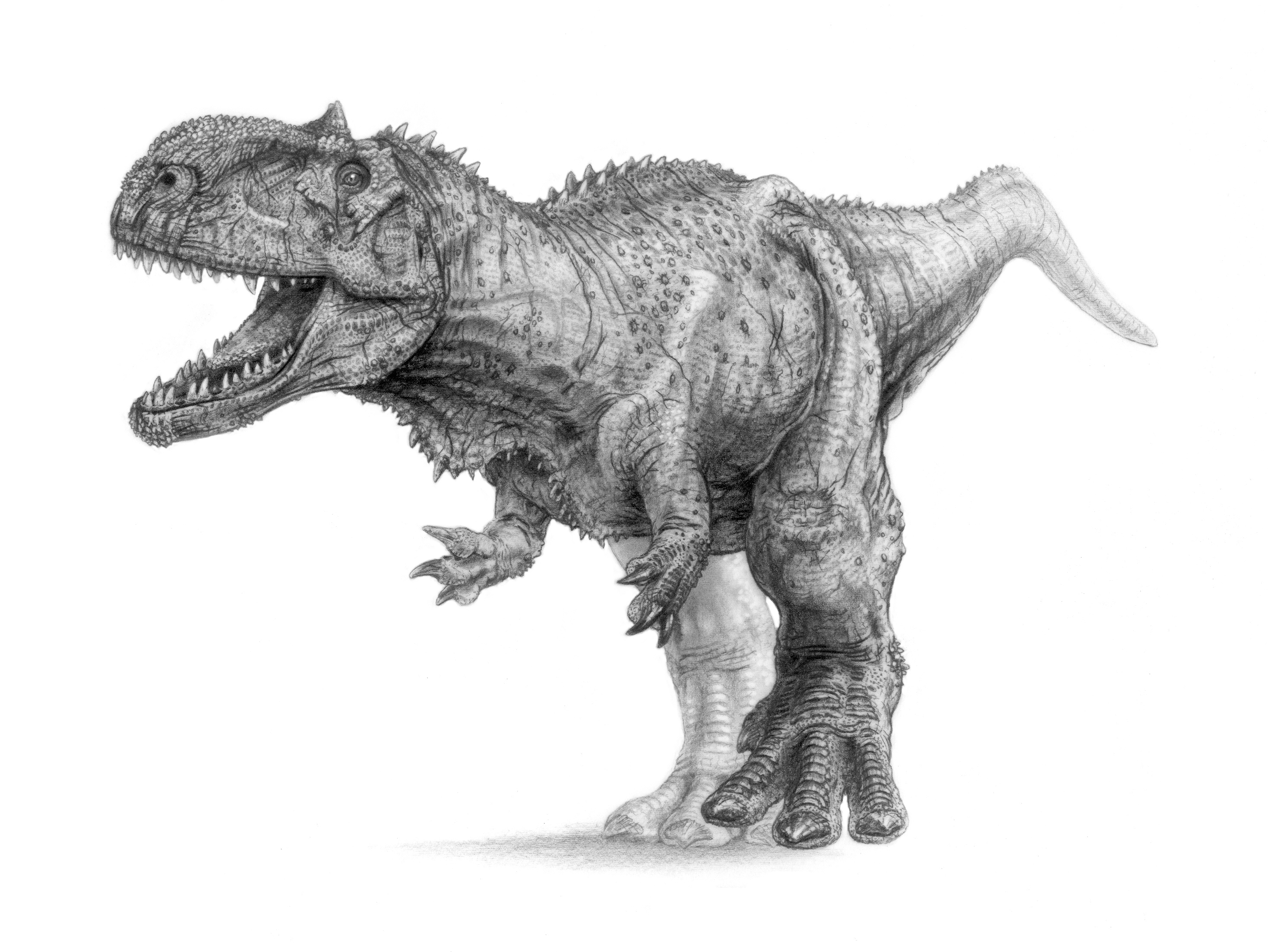 free dinosaur pictures realistic clipart raptor dinosaur pencil and in color free pictures dinosaur