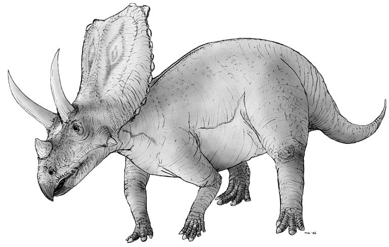 free dinosaur pictures triceratops dinosaur free stock photo public domain pictures dinosaur pictures free