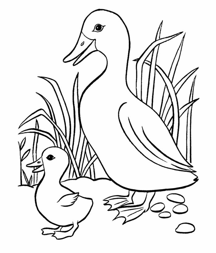 free duck coloring pages donald duck kiarasdisneysite coloring pages free duck