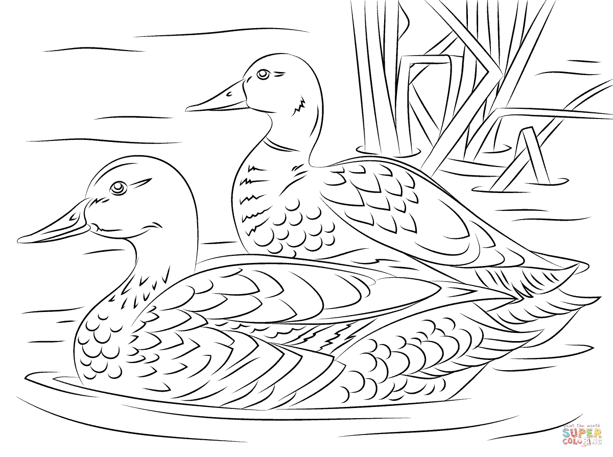 free duck coloring pages duck template animal templates free premium templates duck free coloring pages