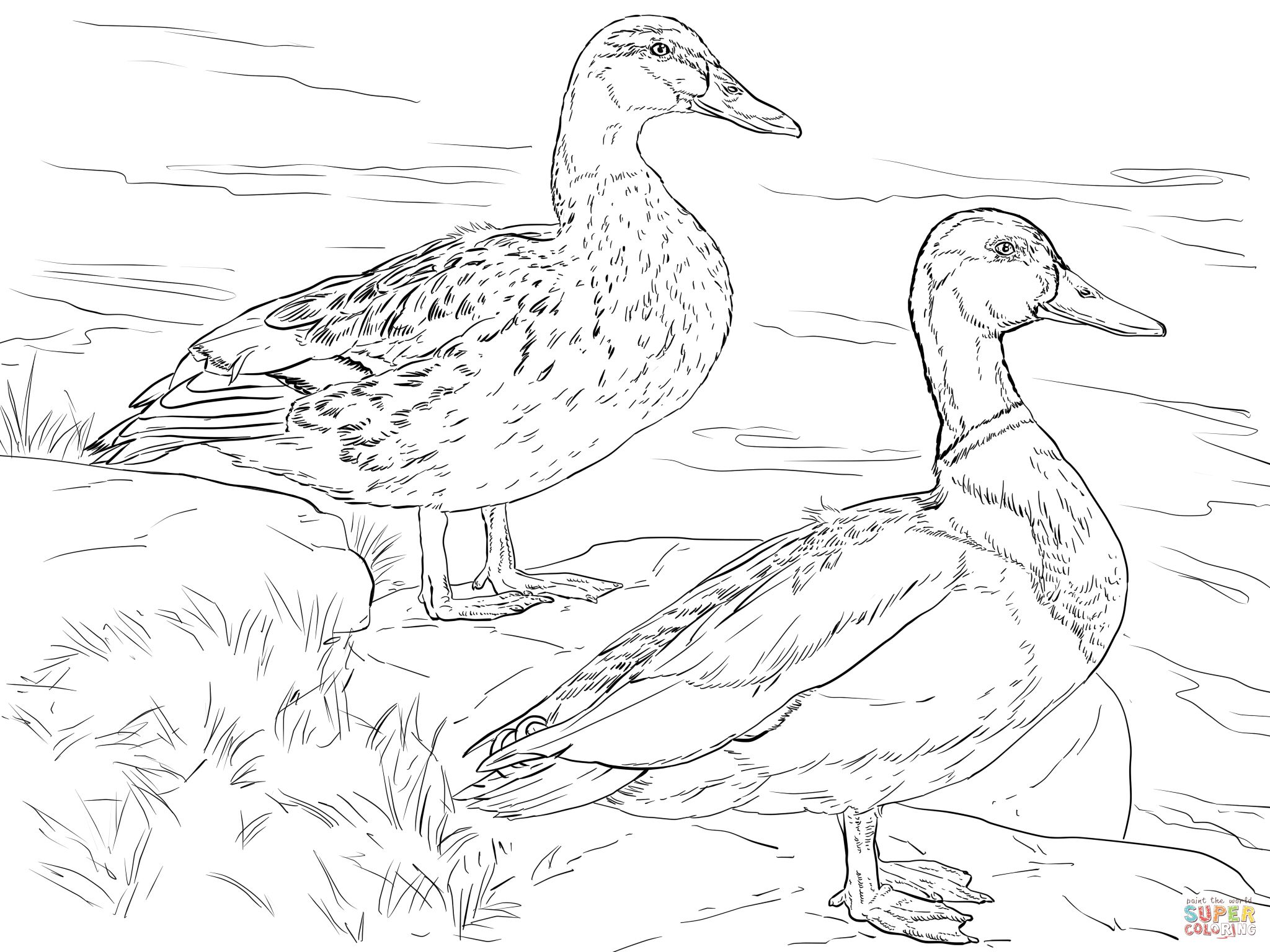 free duck coloring pages free coloring sheets made by joel coloring duck pages free