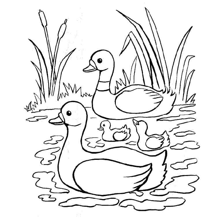 free duck coloring pages pair of mallard ducks coloring page free printable coloring free duck pages