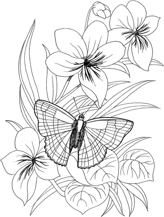 free flower coloring pages for adults adult coloring pages flowers to download and print for free coloring free adults pages for flower