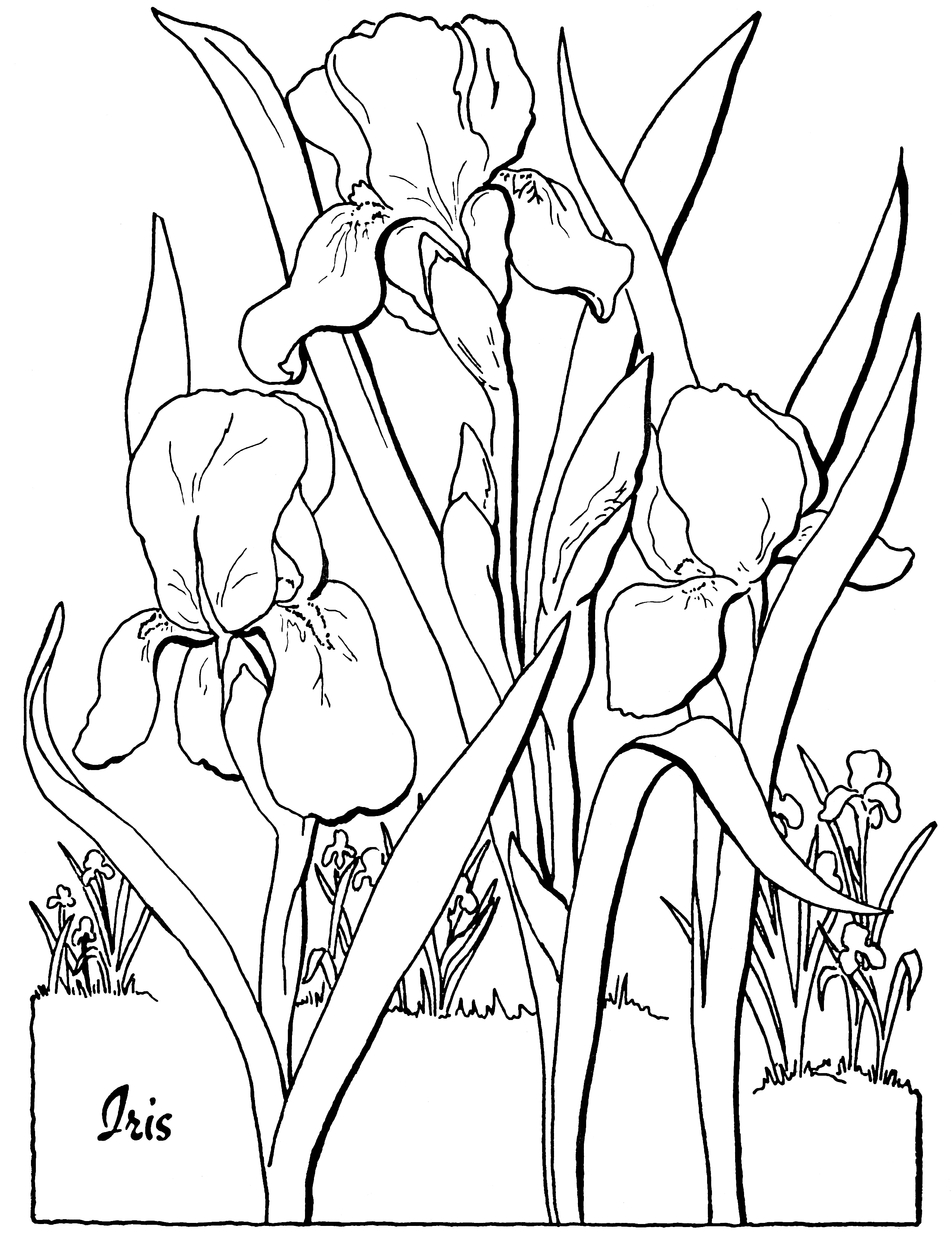 free flower coloring pages for adults flower coloring pages for adults best coloring pages for adults free pages flower coloring for
